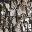 Stock Photo: Cracked wood texture