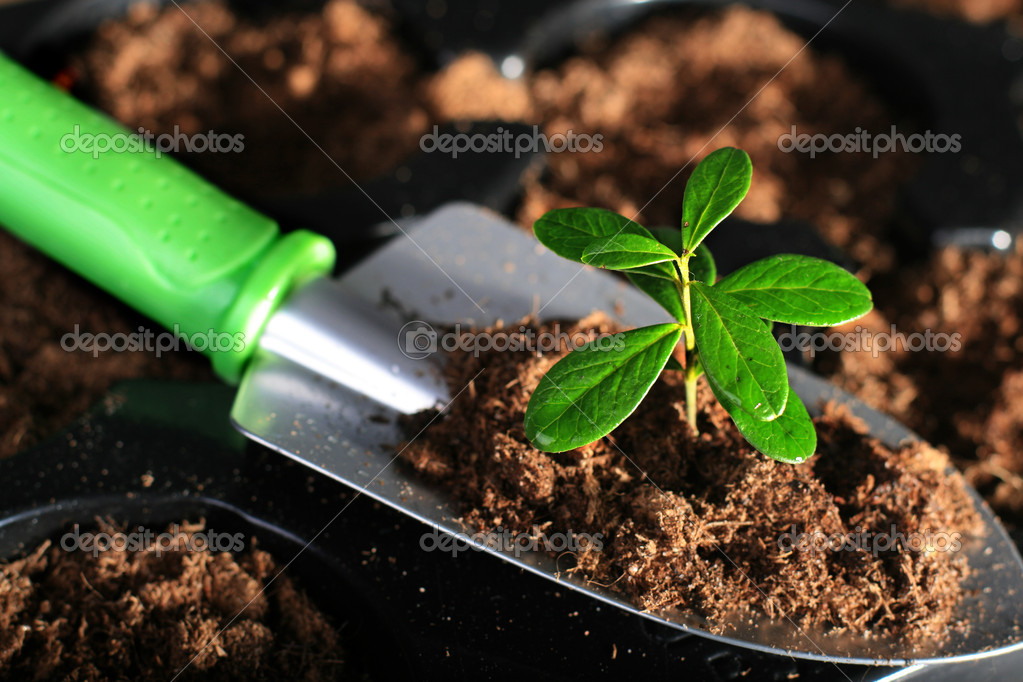 Shovel with soil and plant. — Stock Photo #6573614