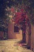 Greek garden — Stock Photo