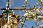 O ramo de fundo de cerejeiras do moinho de água — Foto Stock