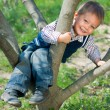 Boy In Tree — Stock Photo