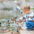 Cute little boy feeding ducks — Stock Photo