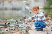 Cute little boy feeding ducks — Stock Photo