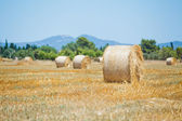 Haystack on a field — Stock Photo