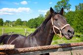 Paard in openlucht kooi — Stockfoto