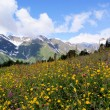 Flower meadow and snowy mountains — Stok fotoğraf