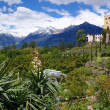 Botanical gardens from Merano — Stock Photo #5402366