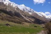 Alpine pastures in Italy — Stock Photo