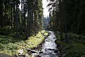 Hike in the Erzgebirge, Germany-10 — Stock Photo