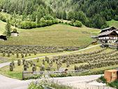 Sklizeň sena v jižním tyrolsku — Stock fotografie