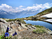 Blue Gentian, glaciers and a mountai — Stock Photo