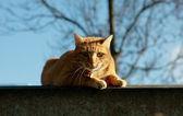 Kot na zewnątrz — Zdjęcie stockowe