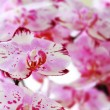 Stock Photo: Beautiful orchid