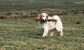 światło pies z stek — Zdjęcie stockowe