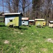 Stock Photo: Apiary with beehives