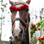 Horse muzzle — Stock Photo