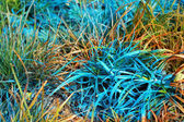 Blue and orange grass — Stock Photo
