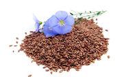Linum usitatissimum flowers and seeds — Stock Photo