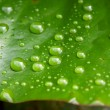 Stock Photo: Raindrops