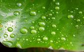 Raindrops — Stock Photo