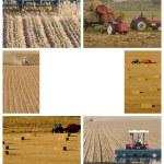Farmer — Stock Photo