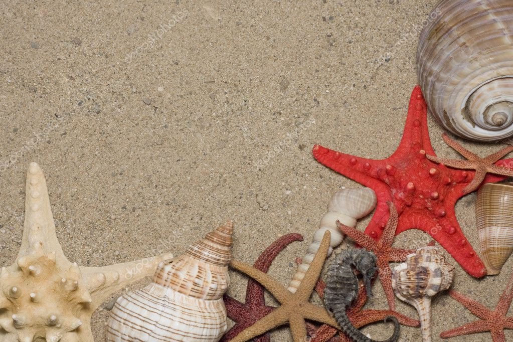 Starfish and shells on the beach, vacation memories   Stock Photo #6535817