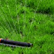 Lawn with Sprinkler — Stock Photo #5571837