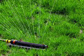 Lawn with Sprinkler — Fotografia Stock