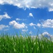 Grass under sky - Stock Photo