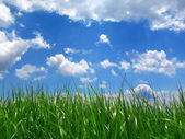 Grass under sky — Stock Photo