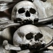 Skulls and bones — Stock Photo #5829945