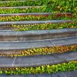 Stock Photo: Staircase with ivy