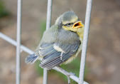 Baby vogel — Stockfoto