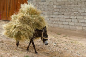 Donkey with the load — Stock Photo