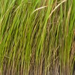 Grass lined — Stock Photo