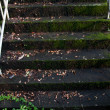 Stock Photo: Mossy stairs