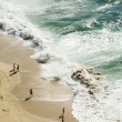 Stock Photo: Beach birds eye view
