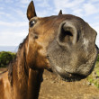 Inquisitive horse — Stock Photo