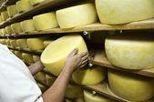 Man isnspecting cheese — Stock Photo