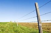 Barbwire çit — Stok fotoğraf