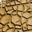 Cracked soil — Stock Photo #6361544