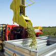 Grape harvesting machinery — Stock Photo