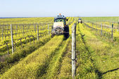 Tractors spraying the vineyard — Stock Photo