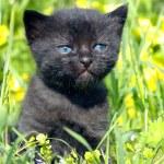 Black kitty — Photo #5422386