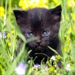Black kitty — Photo #5422389