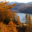 Autumn larches and mountain  lake — Stock Photo