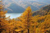 Autumn larches and mountain lake — Stock Photo