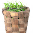 Isolated old basket with green grass — Stock Photo