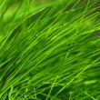 Green grass is good this summer on my lawn — Stock Photo