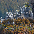 Stock Photo: Seagulls on coastal Rock